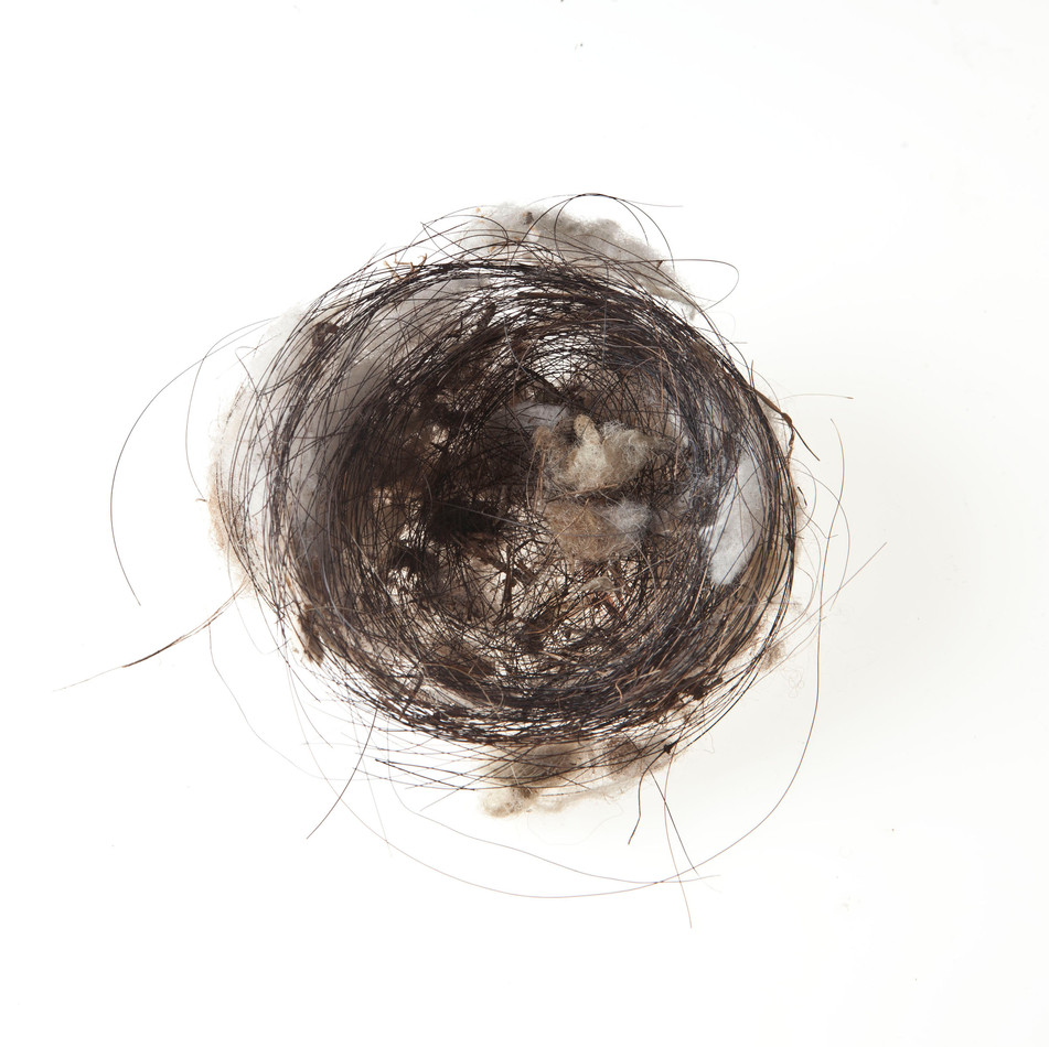Horse Hair Nest #7