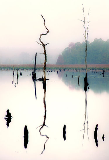 Tree Twice - Pinelands