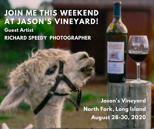 Copy of RS_Jason's Vineyard (3).png