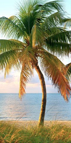 30 - Bending Palm