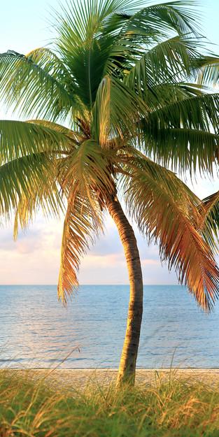 34 - Bending Palm