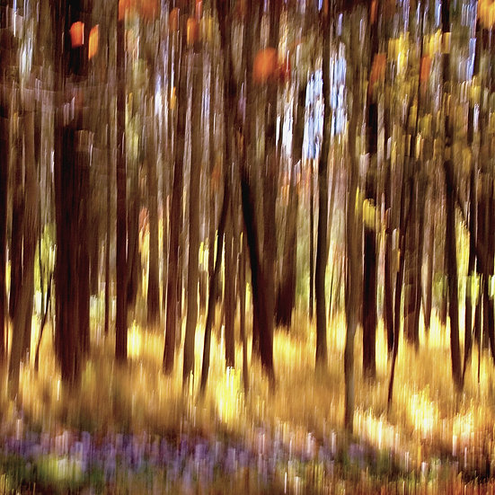 8- THE MAGIC FOREST