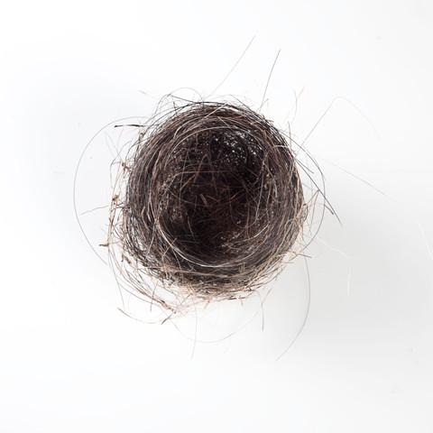Horse Hair Nest #4