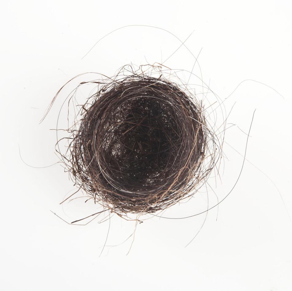 Horse Hair Nest #5