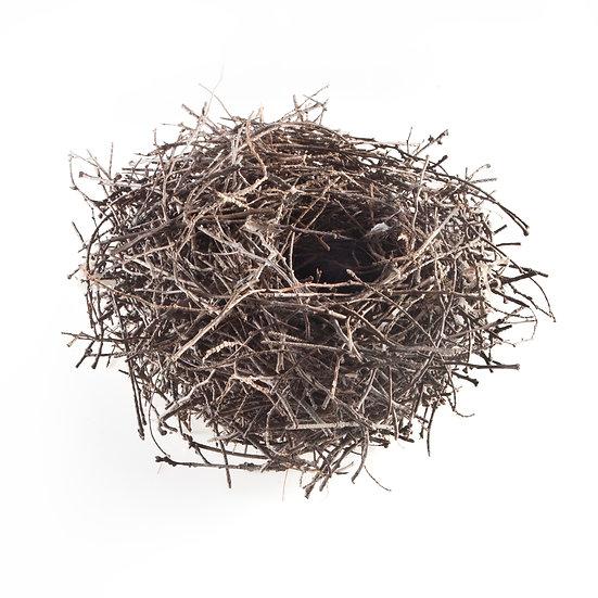 Twig Nest