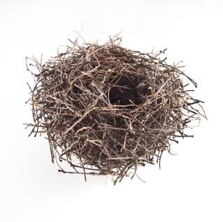 Twig Nest-2S (1).jpg