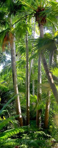 32 - Palms - Key West