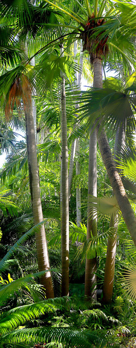 27 - Palms - Key West