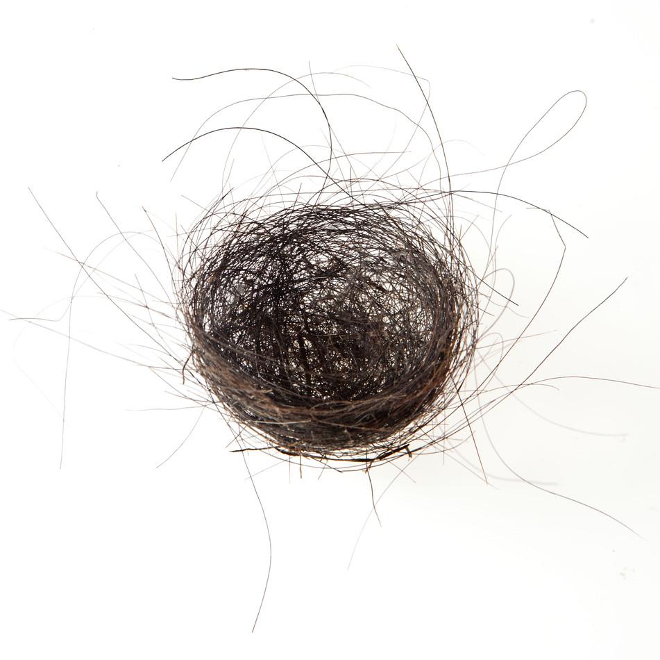 Horse Hair Nest #1