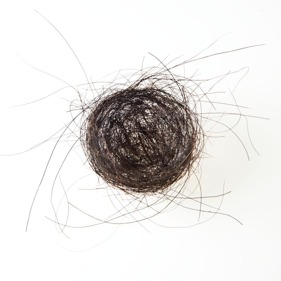 Horse Hair Nest #2