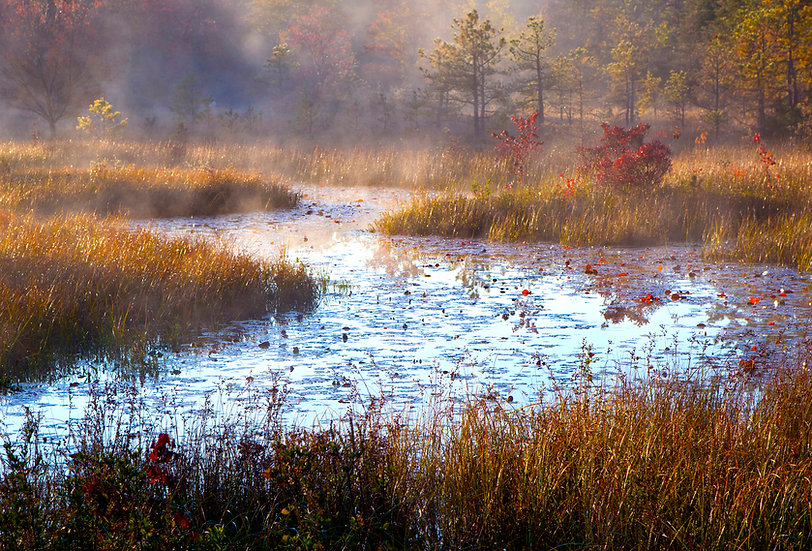Morning Mist - Pinelands