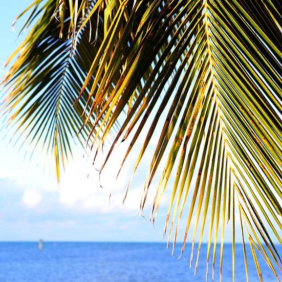 Palm- Key West