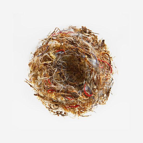 Mesa Nest 1