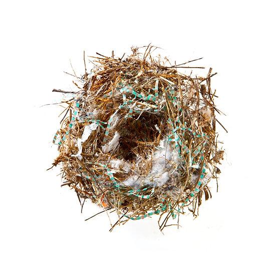 Mesa Nest 2