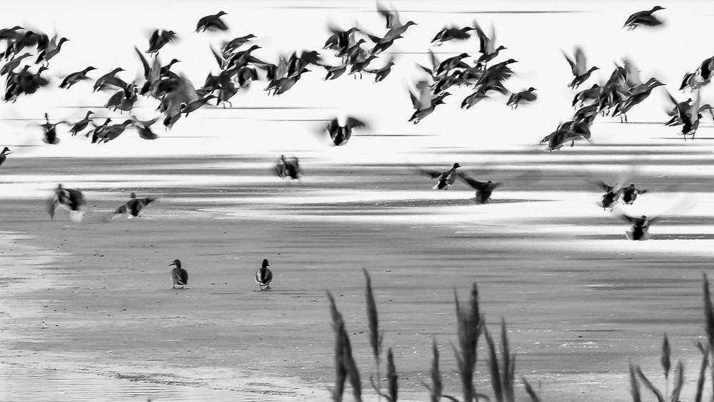 Fotografie: Sergiu Dema; Singurătate la Jimbolia
