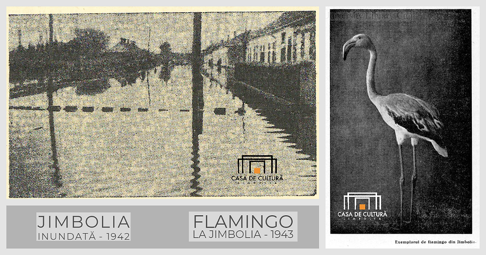 Flamingo, Jimbolia; Casa de Cultură a Orașului Jimbolia