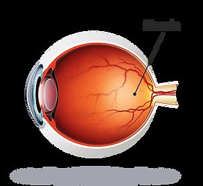 eye-diagram-large.png