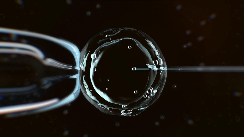 in_vitro_1_2.mp4