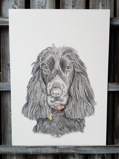 Pet Pencil Portraits