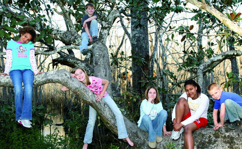 Kids having fun in the tree