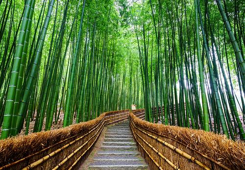 bamboo walkway 2.png