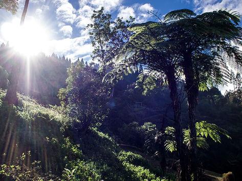 Baumfarn Insel La Réunion, Reunion Urlaub, Reunion Reise, Wandern La Reunion