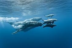 Wale und Delfine La Réunion