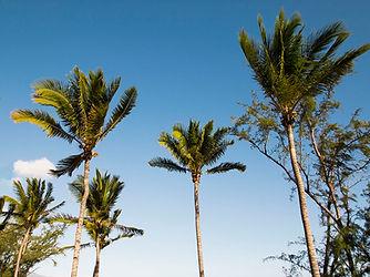Palmen Insel La Réunion