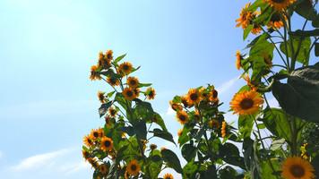 夏全開☆ハレマニの8月イベント🎪