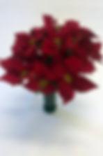 RedPoinsettia_IMG_3266.jpg