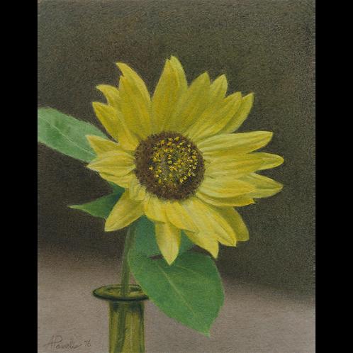 Lady Queen Sunflower, 2016