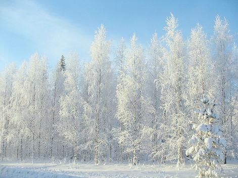winter-2683845_1280.jpg