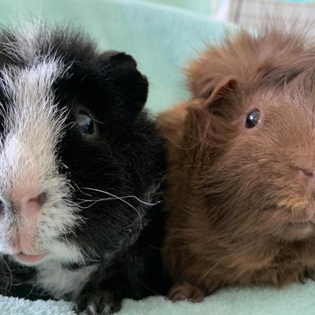 Bertie and Ted.jpg