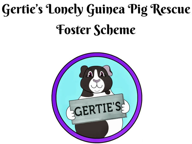 Launching our Foster Scheme