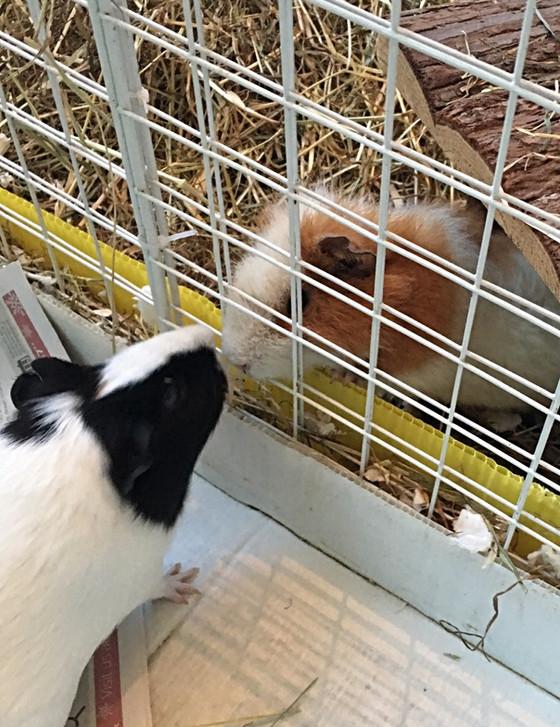Gertie's Gossip 3
