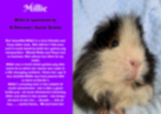 Millie Web.jpg