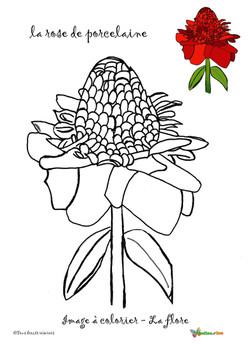 la rose de porcelaine