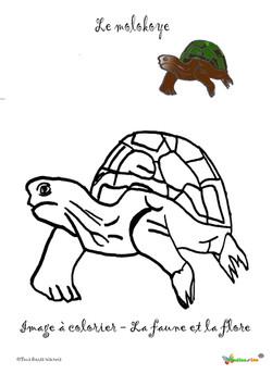 la tortue molokoye