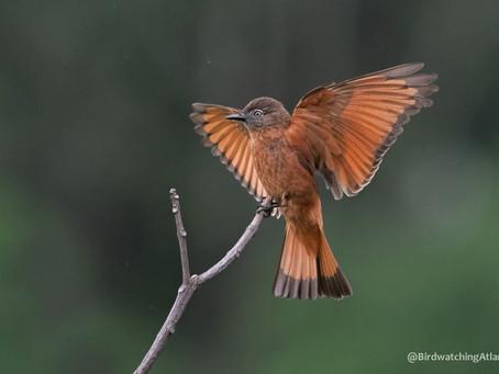 Diário de Campo #015 - Observação de aves na Serrinha do Alambari/RJ