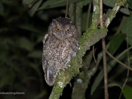 Diário de Campo #020 - Observação de aves na Serrinha do Alambari/RJ