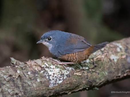 Diário de Campo #38 - Observação de Aves em Resende e Penedo/RJ