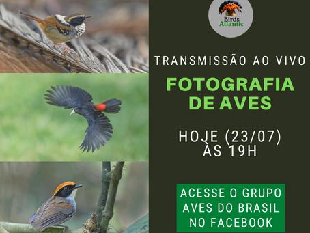 LIVE - FOTOGRAFIA DE AVES