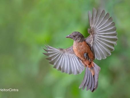 Diário de Campo #019 - Oficina de aves em movimento