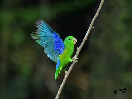 Diário de Campo #018 - Oficina de Aves em Movimento