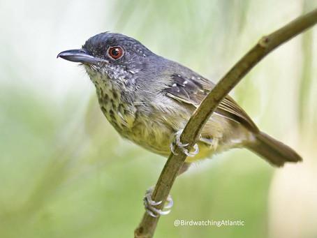 Diário de Campo #023 - Observação de aves em Penedo/RJ