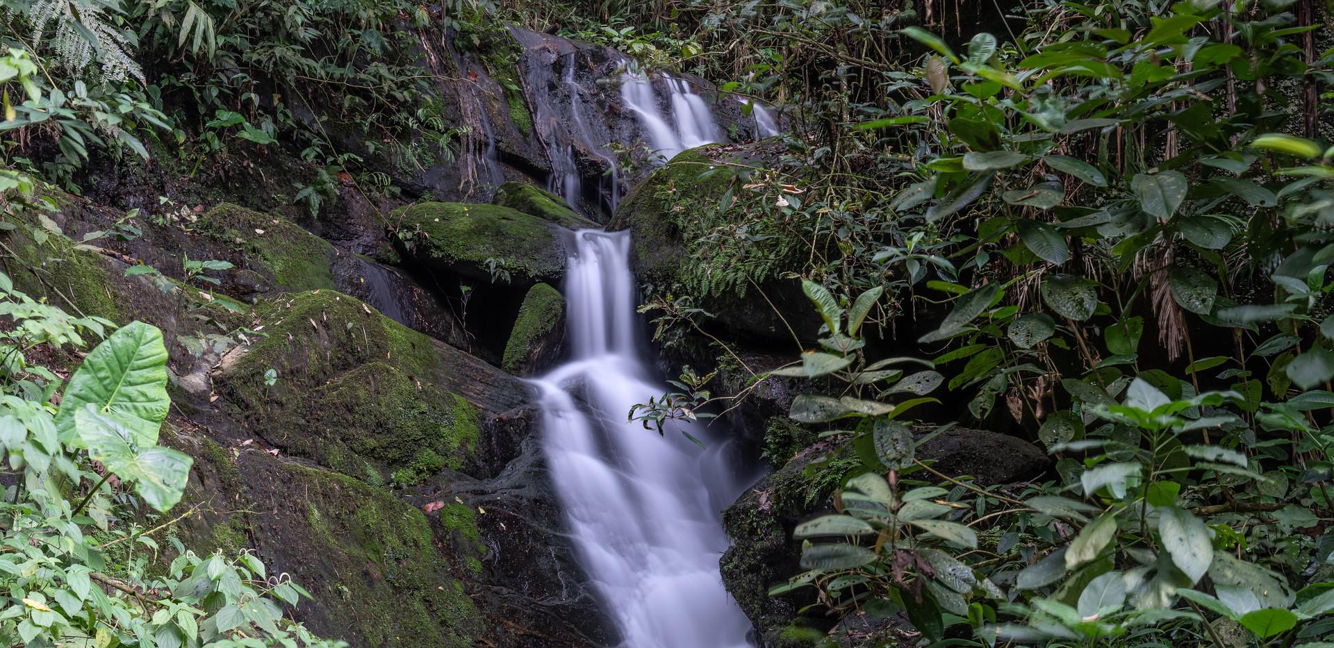 Atlantic Rainforest (@Birds Atlantic)6.j