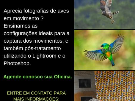 Oficina de aves em movimento e pós processamento de imagens