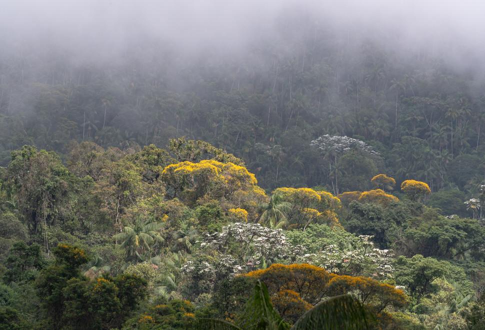 Atlantic Rainforest (@Birds Atlantic)3.j
