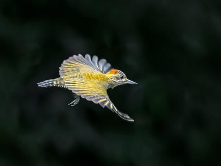 Participação da Birds Atlantic no G1 Globo.com
