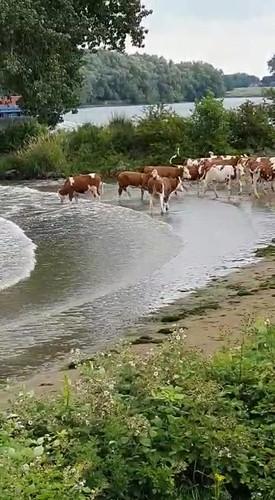 Biologisch melkveebedrijf de Werd van den Berg